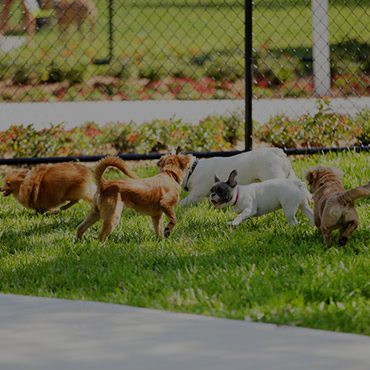 Large Dog Park at Solis Garden Apartments